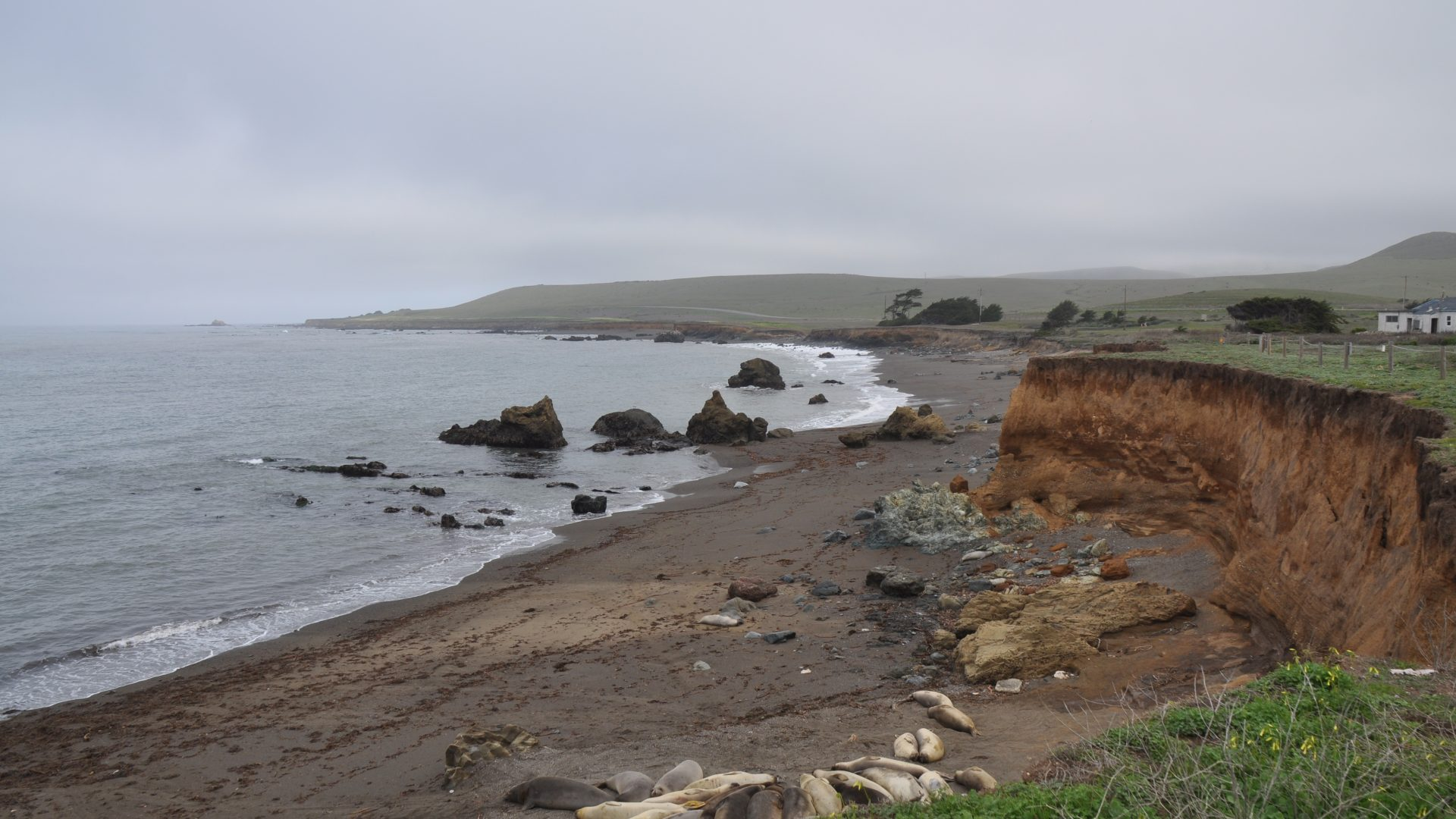 The Triumph of the Elephant Seal